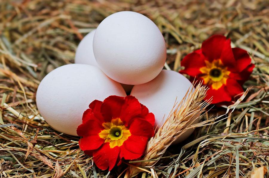 Porque comer huevos ecológicos